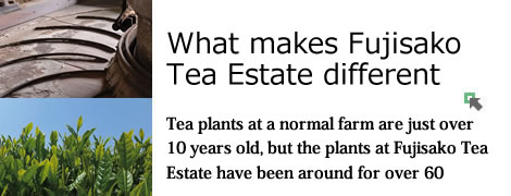 What makes Fujisako Tea Estate different/Tea plants at a normal farm are just over 10 years old, but the plants at Fujisako Tea Estate have been around for over 60
